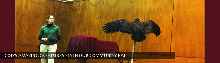 God's Amazing Creatures Fly in Our Community Hall